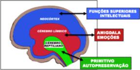 O Cérebro Visceral